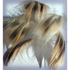 Flank hen duck feathers